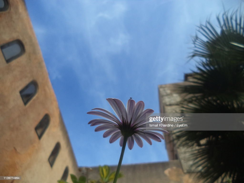 Low Angle View Of Flowering Plants Against Sky : Stock Photo