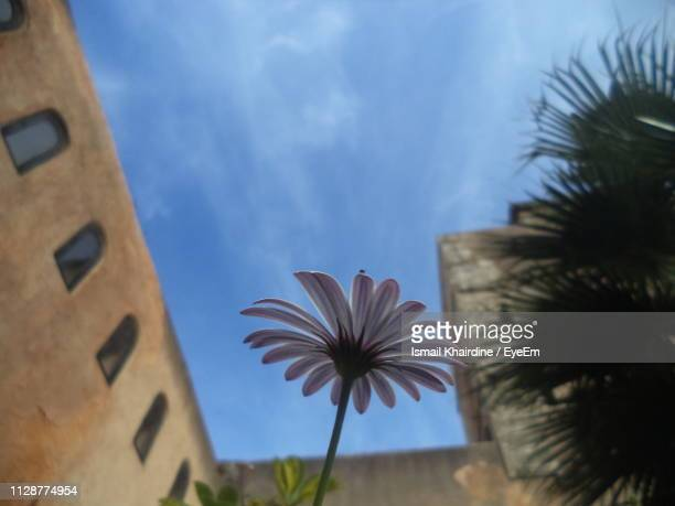 low angle view of flowering plants against sky - ismail khairdine stock photos and pictures