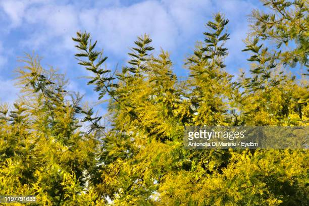 low angle view of flowering plants against sky - antonella di martino foto e immagini stock