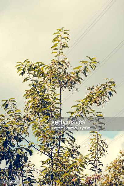 low angle view of flowering plants against sky - albrecht schlotter stock photos and pictures