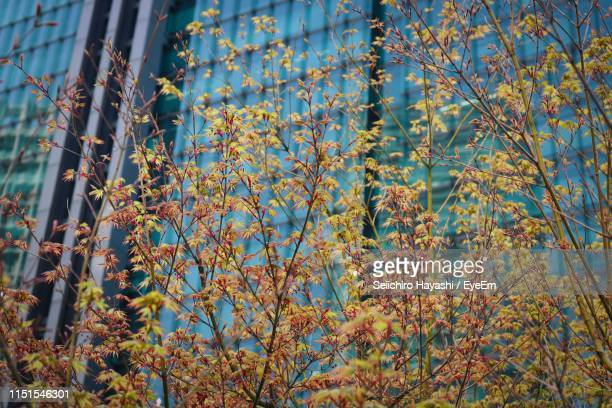 low angle view of flowering plants during autumn - seiichiro hayashi ストックフォトと画像