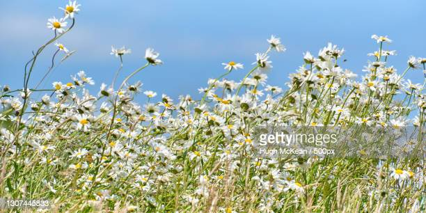 low angle view of flowering plants on field against sky - uncultivated stock pictures, royalty-free photos & images
