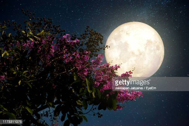 low angle view of flowering tree against sky at night - moon stock pictures, royalty-free photos & images