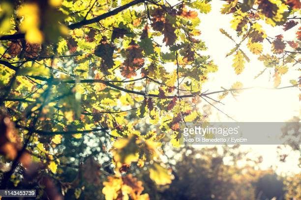 low angle view of flowering tree against sky - benedetto photos et images de collection
