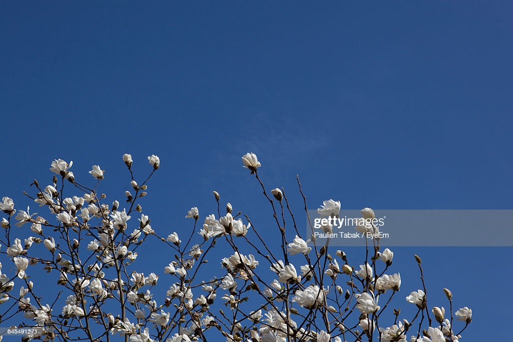 Low Angle View Of Flowers Against Blue Sky : Stockfoto