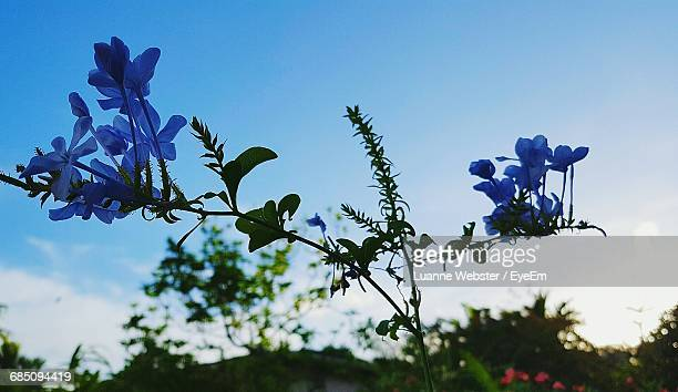low angle view of flowers against blue sky - the webster stock pictures, royalty-free photos & images
