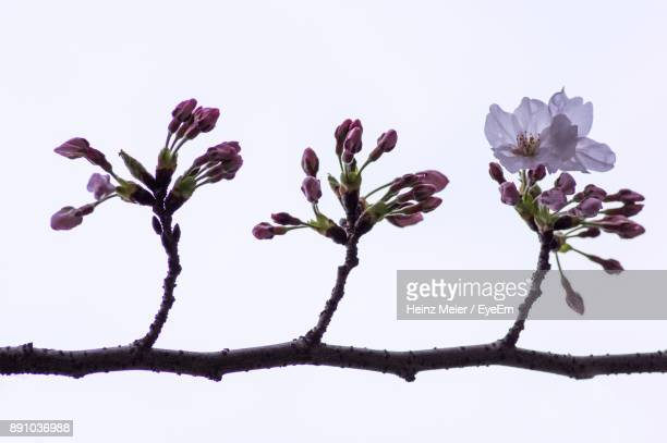 Low Angle View Of Flowers Against Blurred Background