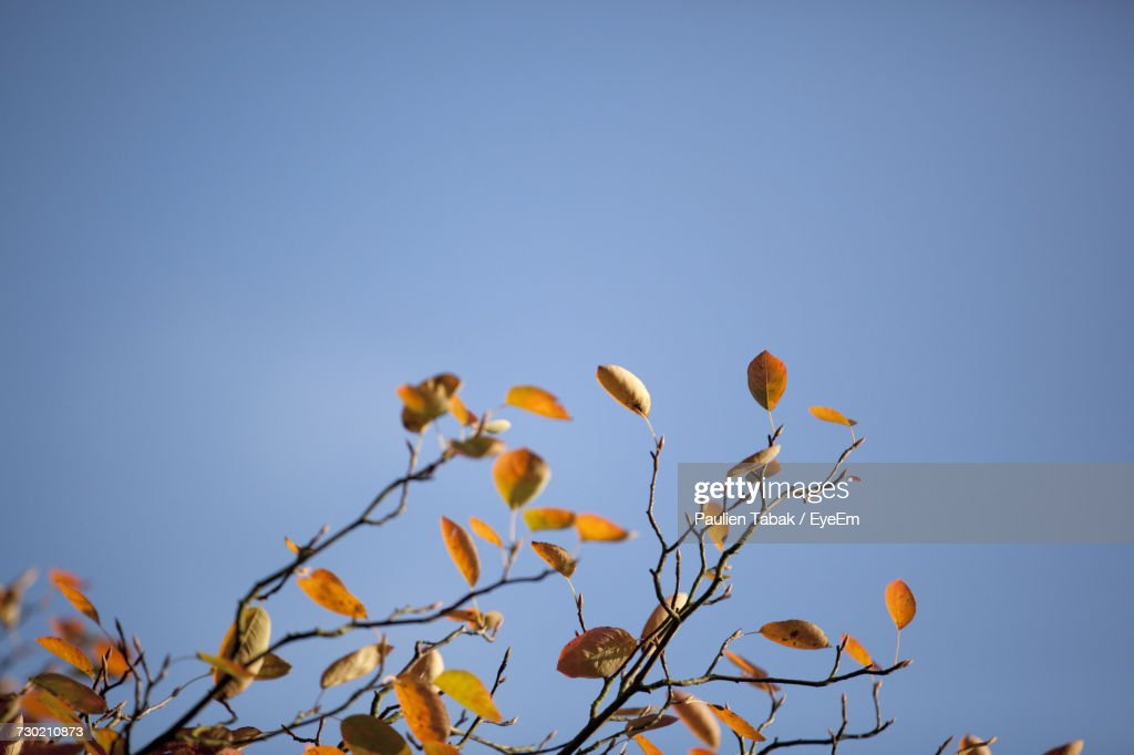 Low Angle View Of Flowers Against Clear Blue Sky : Stockfoto