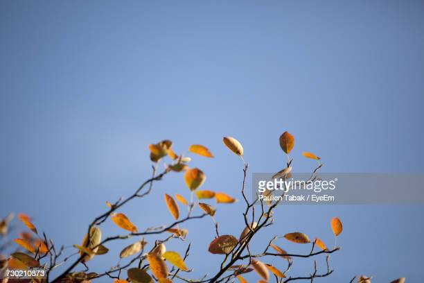low angle view of flowers against clear blue sky - paulien tabak foto e immagini stock