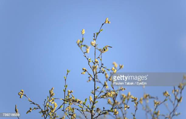 Low Angle View Of Flowers Against Clear Blue Sky