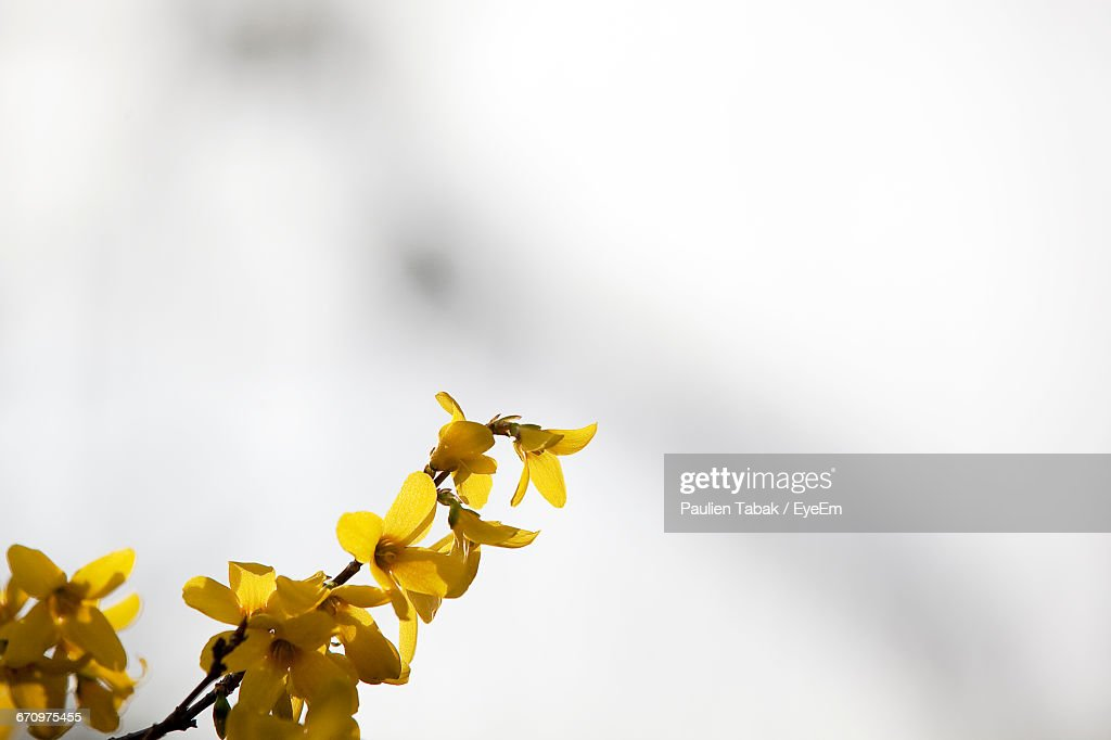 Low Angle View Of Flowers Against Sky : Stockfoto