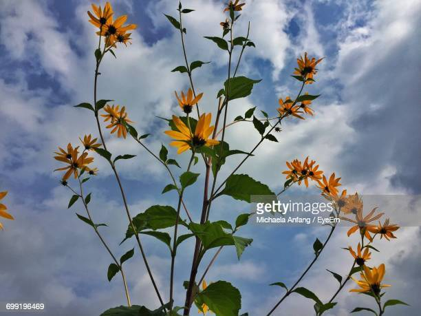 low angle view of flowers against sky - anfang stock pictures, royalty-free photos & images