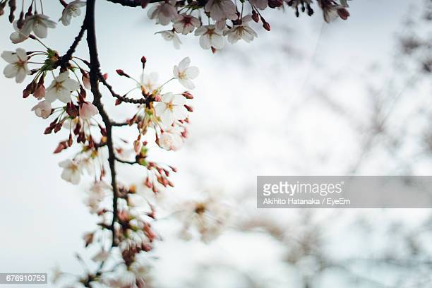 low angle view of flowers blooming against sky - akihito imagens e fotografias de stock