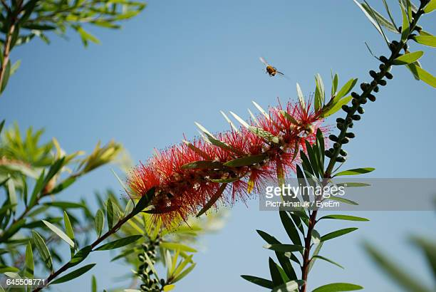 low angle view of flowers blooming on tree - piotr hnatiuk photos et images de collection