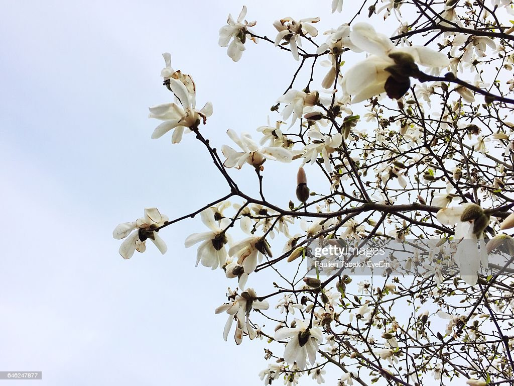 Low Angle View Of Flowers Blooming On Tree : Stock Photo