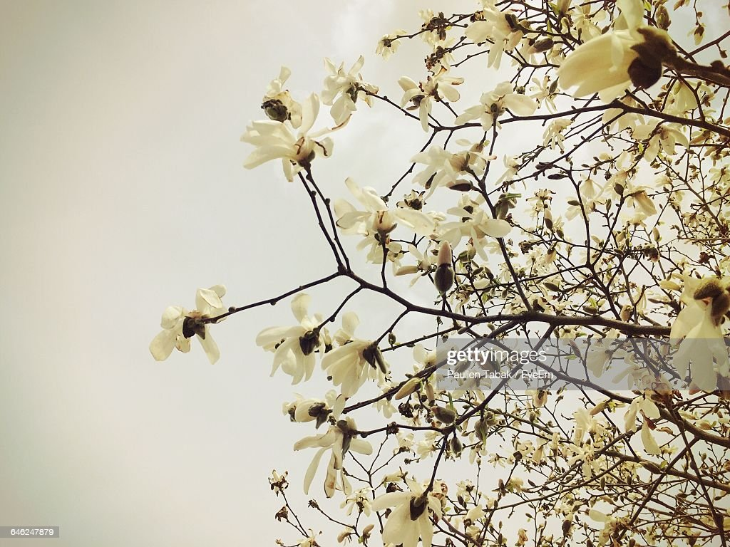 Low Angle View Of Flowers Blooming On Tree : Foto stock