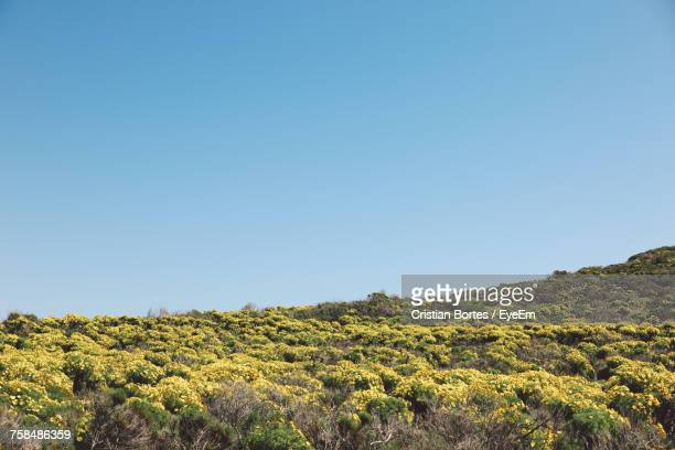 low angle view of flowers growing on hill against clear blue sky during sunny day - bortes stock pictures, royalty-free photos & images