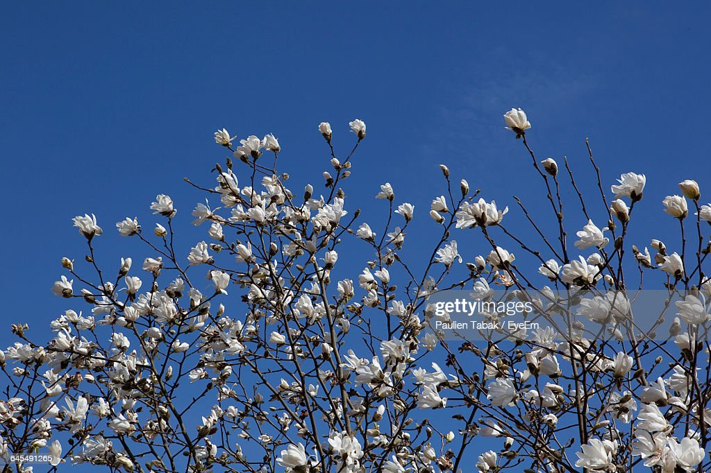 Low Angle View Of Flowers : Stockfoto