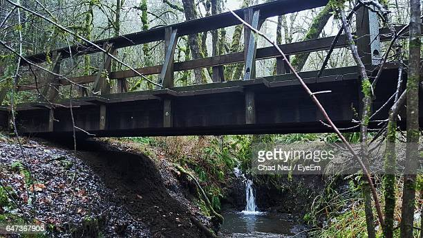 low angle view of footbridge over river in forest - corvallis stock pictures, royalty-free photos & images
