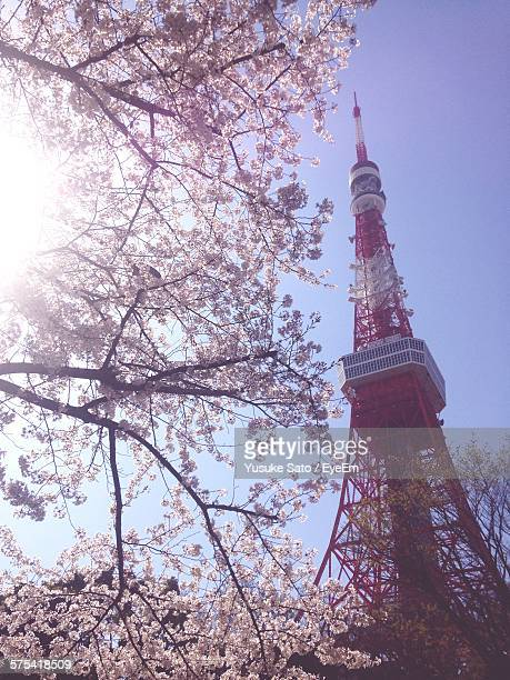 Low Angle View Of Fresh Cherry Blossoms Blooming By Tokyo Tower Against Sky