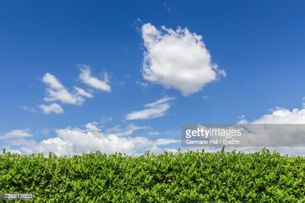 low angle view of fresh green field against sky - bush stock pictures, royalty-free photos & images