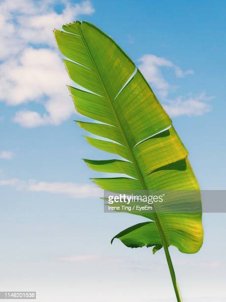 Low Angle View Of Fresh Green Leaves Against Sky