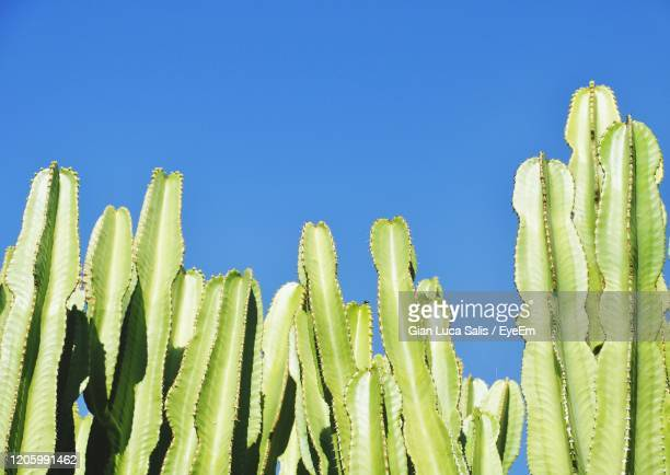 low angle view of fresh green plants against clear blue sky - exotic_species stock pictures, royalty-free photos & images