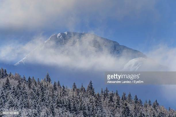 Low Angle View Of Frozen Trees With Snowcapped Mountain In Clouds Against Sky