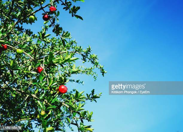 low angle view of fruits on tree against clear blue sky - appelboom stockfoto's en -beelden