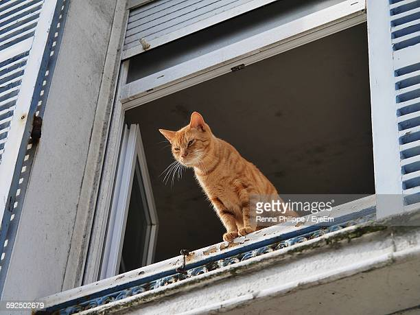Low Angle View Of Ginger Cat On Window Sill