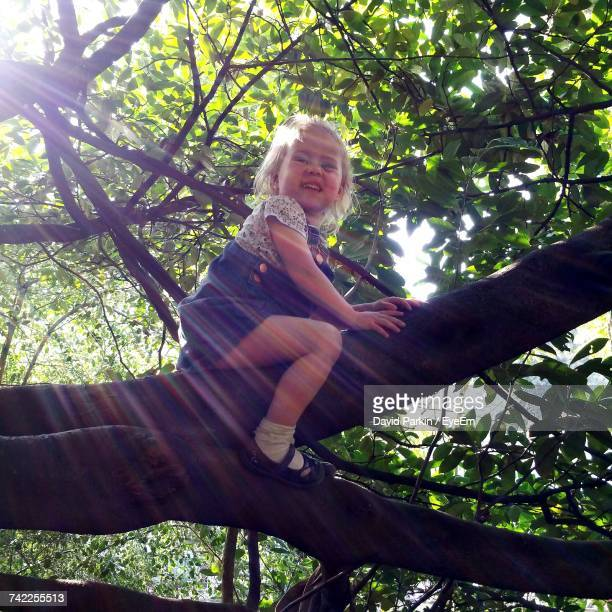 low angle view of girl looking away while sitting on top of tree - chesterfield square stock-fotos und bilder