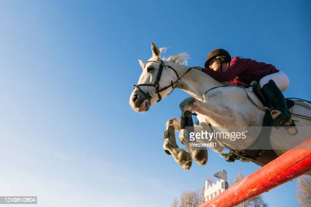 low angle view of girl riding white horse while jumping over hurdle during training obstacle course against clear blue sky - horse racing stock pictures, royalty-free photos & images