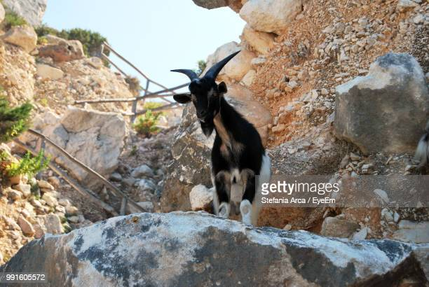 Low Angle View Of Goat On Rock