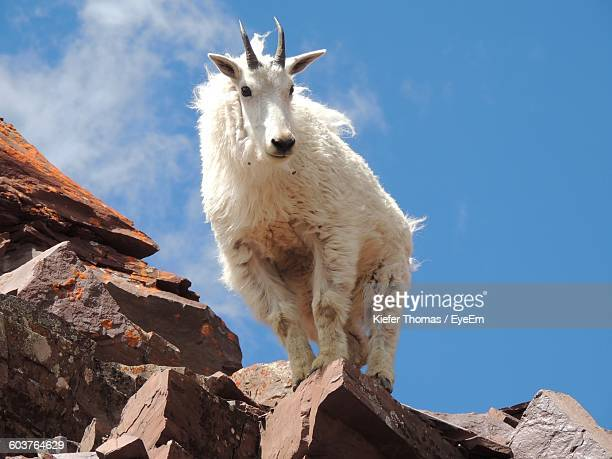 Low Angle View Of Goat On Rocky Mountains Against Sky