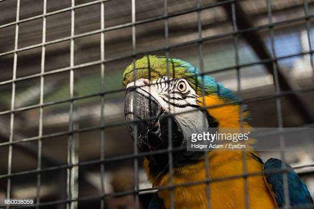 low angle view of gold and blue macaw in cage - animales en cautiverio fotografías e imágenes de stock
