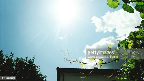 Low Angle View Of Grape Leaves Against Sky