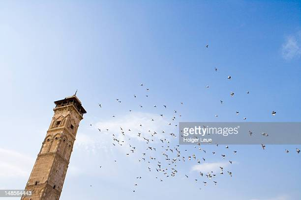 low angle view of great mosque minaret and flock of birds. - aleppo stock pictures, royalty-free photos & images