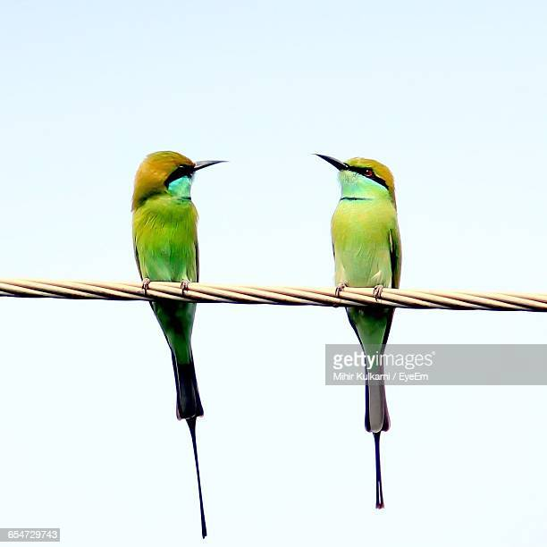 Low Angle View Of Green Bee-Eaters Perching On Rope Against Clear Sky