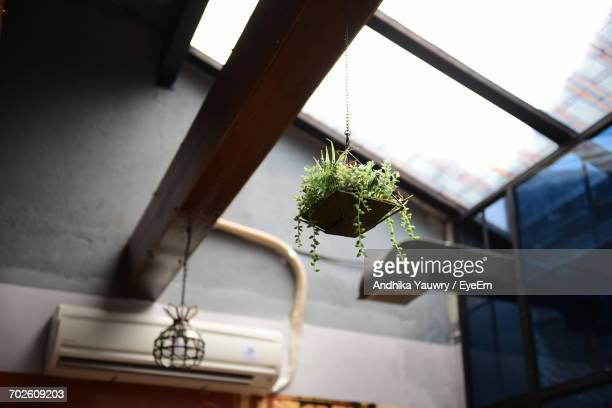 low angle view of hanging houseplant at home - hanging basket stock pictures, royalty-free photos & images
