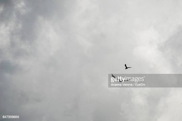 Low Angle View Of Hawks Flying Against Cloudy Sky