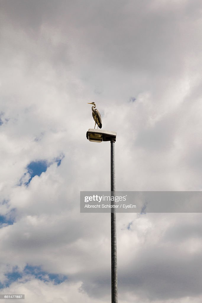 Low Angle View Of Heron On Street Light Against Cloudy Sky : Stock-Foto