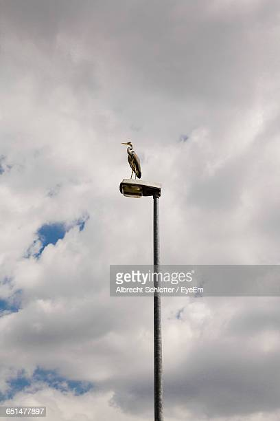 Low Angle View Of Heron On Street Light Against Cloudy Sky