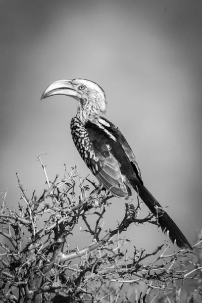 Low angle view of hornbill perching on branch against clear sky,Otavi,Otjozondjupa,Namibia