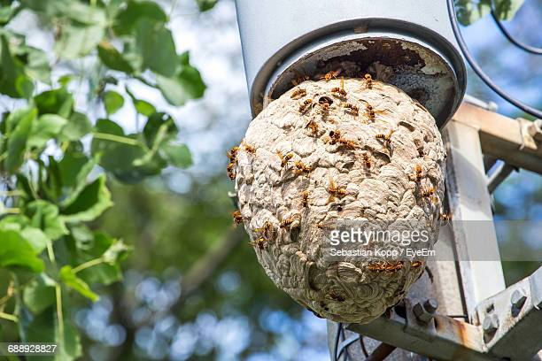 low angle view of hornets on nest - murder hornet stock pictures, royalty-free photos & images