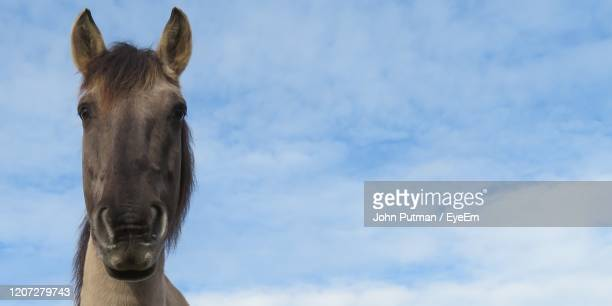 low angle view of horse against sky - horsedrawn stock pictures, royalty-free photos & images