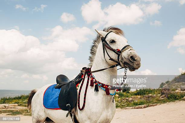 Low Angle View Of Horse Standing On Field Against Sky