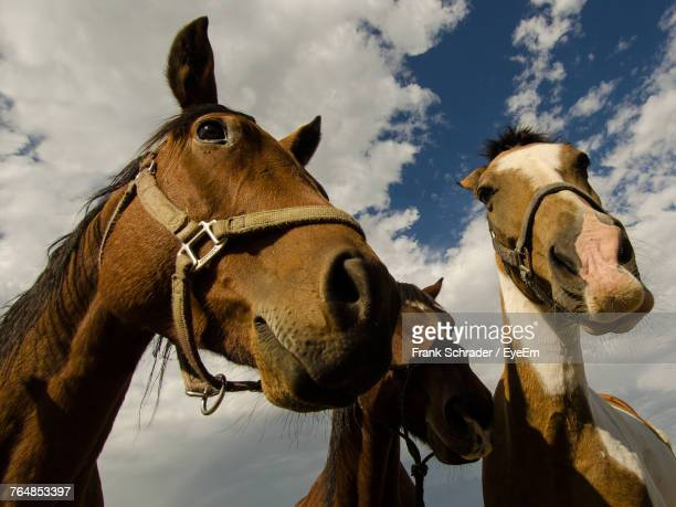 Low Angle View Of Horses Against Cloudy Sky