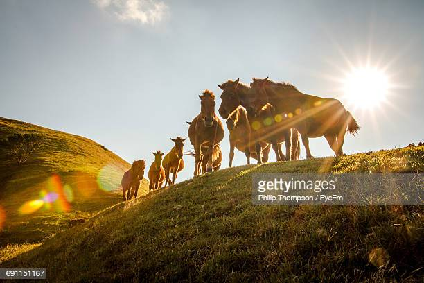 Low Angle View Of Horses On Hill Against Sky