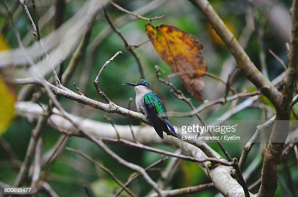 Low Angle View Of Humming Bird Perching On Tree