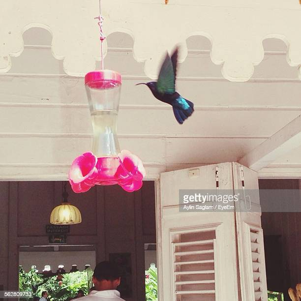 Low Angle View Of Hummingbird Flying By Feeder Hanging From Ceiling